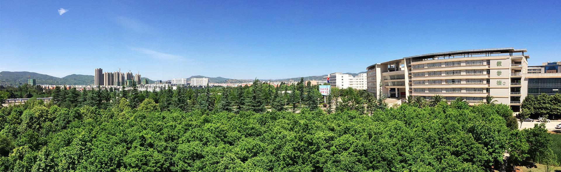 校园风景-枫树林-夏
